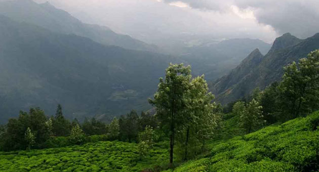Kolukkumalai- World Highest Elevation Tea Plantation